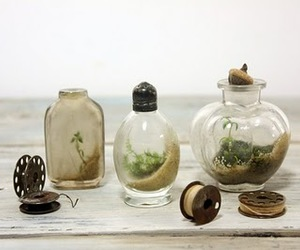 bottles, natural, and plant image