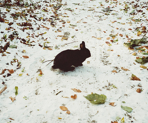 rabbit, bunny, and snow image