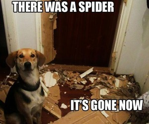 funny and spider image