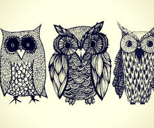 owl, art, and bird image