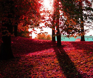 tree, beautiful, and red image