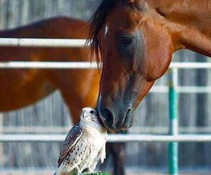 horse, animal, and owl image