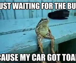 funny, toad, and bus image