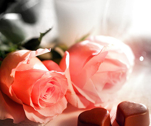 chocolate, rose, and pink image