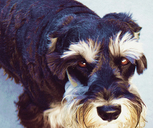 colors, dog, and eyes image