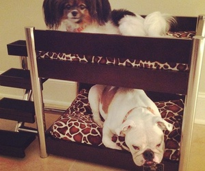 doggie bunk beds image