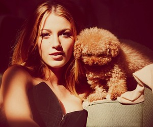 blake lively, dog, and gossip girl image