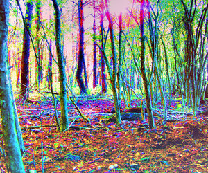 forest, psychedelic, and trees image