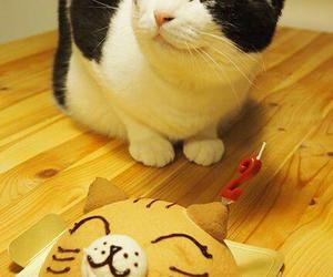 cat, cake, and funny image