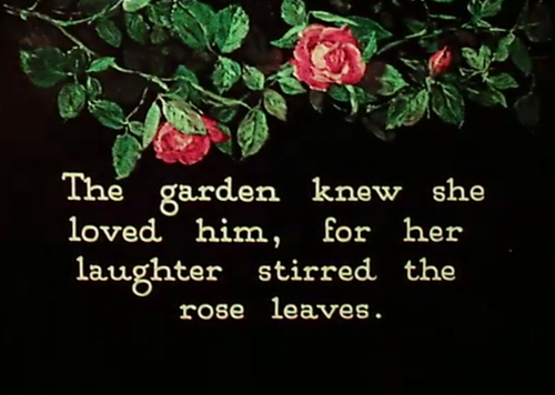 flowers, garden, and sweet image