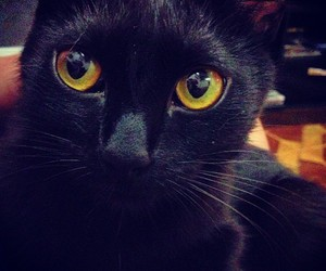 black, cat, and cores image