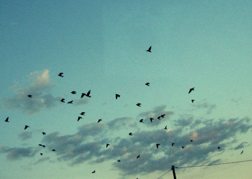 birds, dawn, and sky image