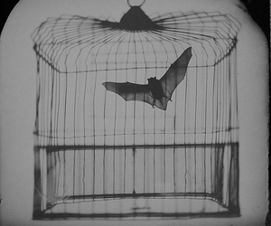 bat, cage, and black and white image