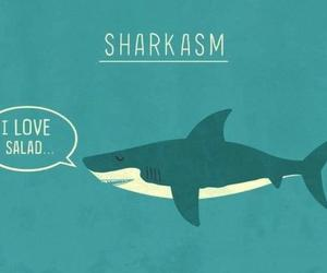shark, sarcasm, and funny image