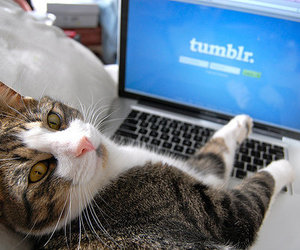 cat, tumblr, and photography image