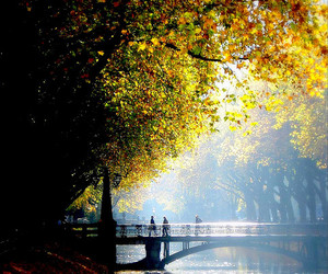 beautiful, river, and landscape image