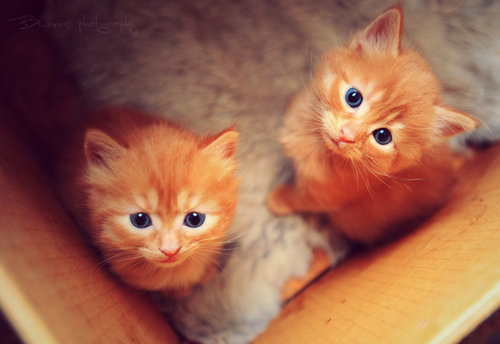 Image About Love In Cutecats By Tiia On We Heart It