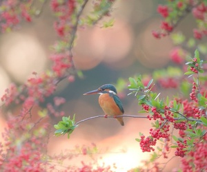 bird, flowers, and nature image