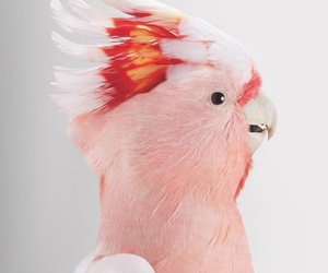 bird, pink, and vintage image