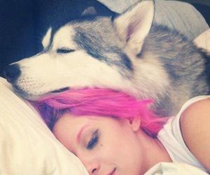 dog, pink, and husky image