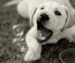 dog, bubbles, and cute image