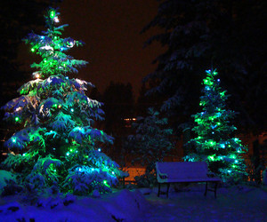beauty, lights, and christmas trees image