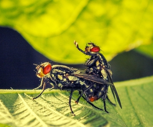 fly, insect, and bryan carvalho image