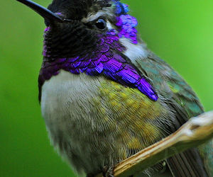 pretty and hummingbird image