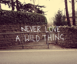 love, wild, and quote image