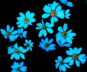flowers, blue, and neon image