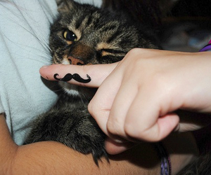 cat, cute, and mustache image