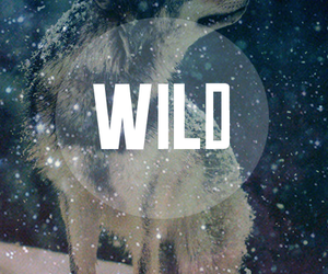 wild, wolf, and snow image