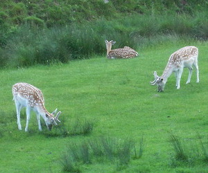 deer and fawn image