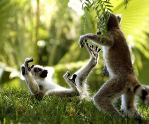 happy, lemurs, and playful image