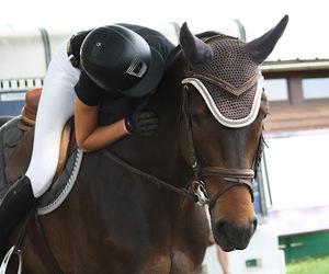 cheval, bai, and complicité image