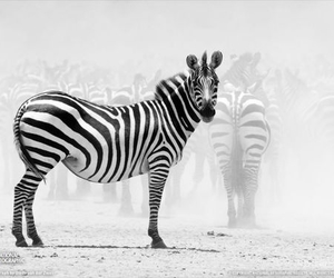 animal, black and white, and nature image