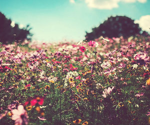 field, flowers, and nature image