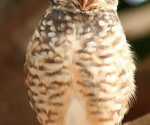 animal, owl, and photography image