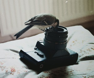 bird, camera, and vintage image