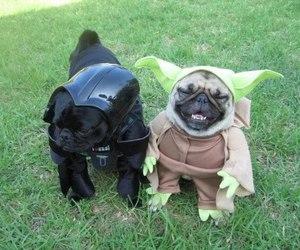 dog, pug, and star wars image
