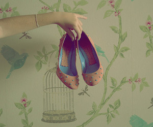 shoes and photography image