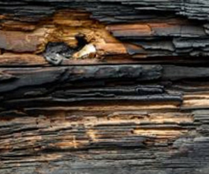 grungy, wood, and textures image