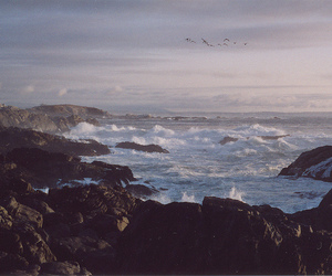 sea, bird, and nature image