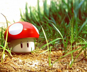 mushroom and cute image