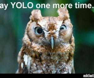 funny and yolo image