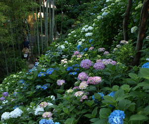 flowers, garden, and nature image