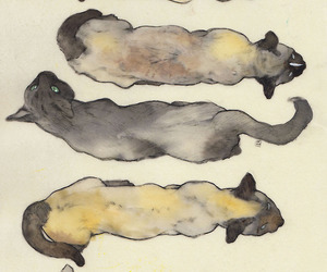 cats, siamese, and illustration image