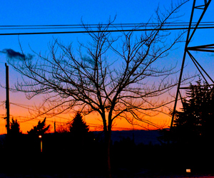 photography, tree, and wires image
