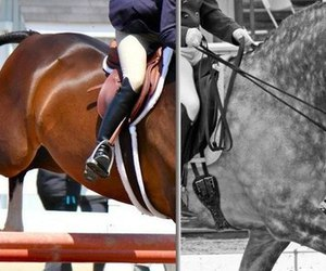 brown, dressage, and horse image