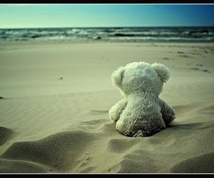 beach, bear, and alone image